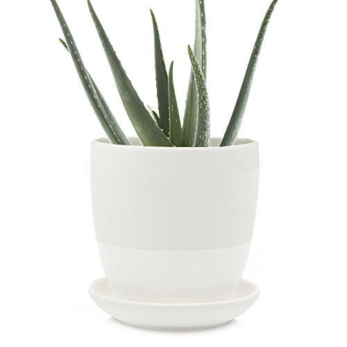 Chive - Big Dyad, Large 5 Inch Succulent Pot and Saucer - Ceramic Plant Pot with Drainage Hole and Detachable Saucer, Tray and Dish (White) ()