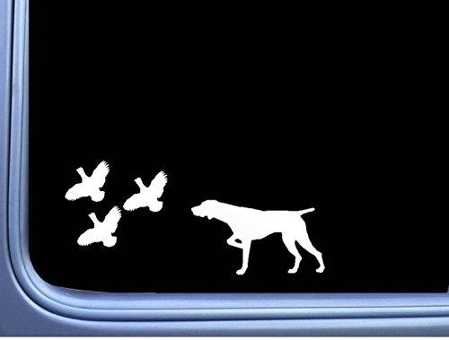 German Shorthair Pointer 3 Quail L447 8 inch shorthaired dog -