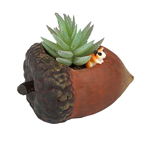 Cute Nut Succulent Planter Pot - Small Rustic Style Plant Container for Succulent Plants and Small Cactus – Creative Gift Idea for Father's Day and Fairy Garden Lover