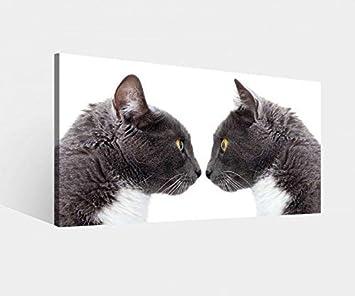 Foto en Lienzo Gato Gatos Par Beso Amor Animales Dormitorio Imagen Imágenes Lienzo Mural Madera Cuadros en Lienzo Del Fabricante 9W979-60x30cm: Amazon.es: ...