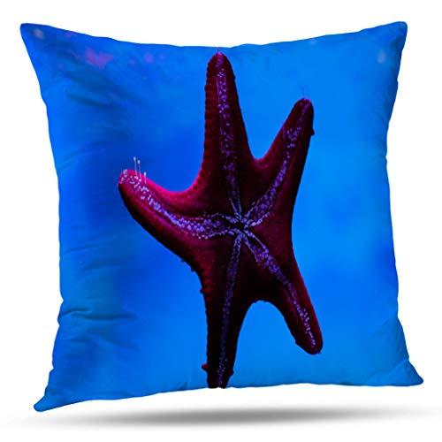 - Lshtar Throw Pillow Covers, Starfish Underwater Sea Life Abstract Animal Animals Aquatic Beautiful for Sofa Cushion CoverShort Plush Design Decoration Home Bed Pillowcase 18x18 inch