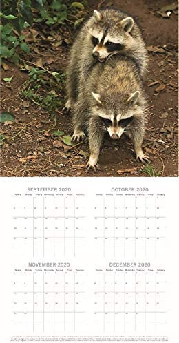 Includes 180 Reminder Stickers Animals Humping 12 x 12 Inch Monthly View 2021 Wall Calendar 16-Month