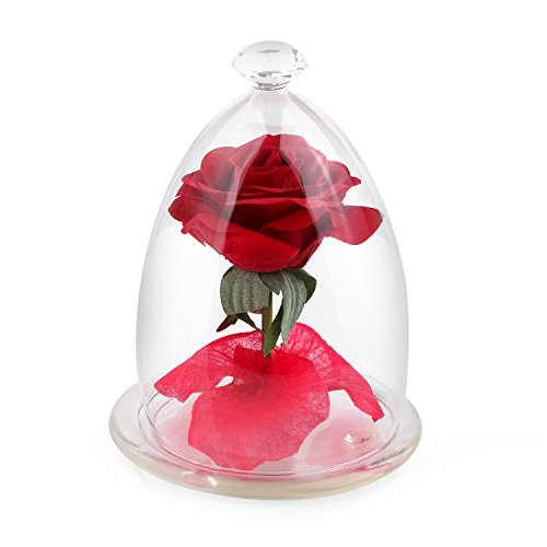 small cake glass dome - 7