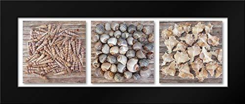 Seashells Pure Framed Art Print by Tarin, Michael