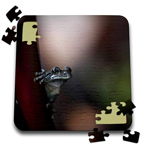 3dRose Stamp City - Amphibian - Macro Photograph of a Copes Gray Tree Frog clinging to a Canna Leaf. - 10x10 Inch Puzzle (pzl_316746_2)