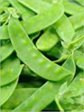 Ho Lan Dow (Snow Pea) - Super-Sweet!! - Raw or Cooked -Very Productive Variety! (25 - Seeds)