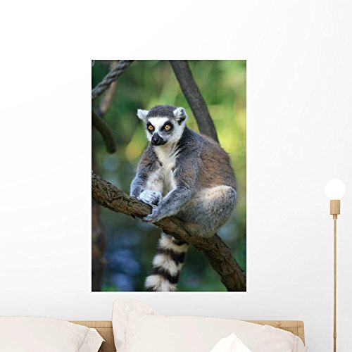 Wallmonkeys Lemur Monkey Wall Decal Peel and Stick Graphic WM75001 (24 in H x 16 in W)