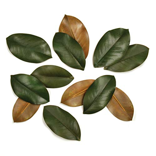- SET of 12 LOOSE MAGNOLIA LEAVES IN BOX