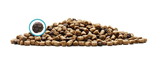 Blue-Buffalo-Wilderness-High-Protein-Grain-Free-Natural-Adult-Dry-Cat-Food