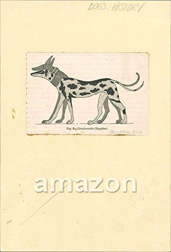 antique-print-greyhounds-egyptian-dogs-ajk-898