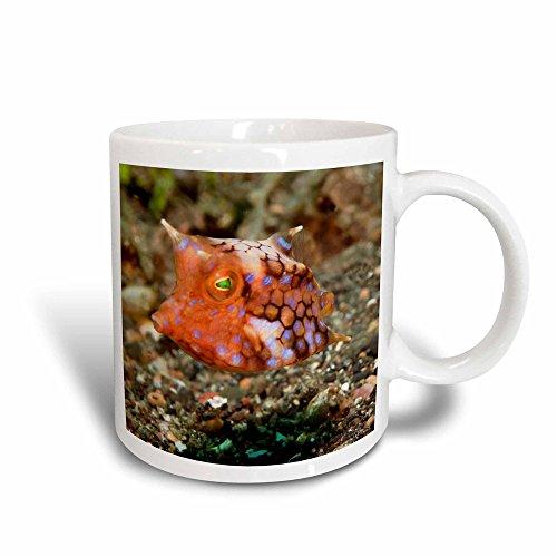 Juvenile Form - 3dRose mug_45868_3 Longhorn Cowfish in Juvenile Form (Lacyotia Comuta) Lembeh Straits, Indonesia Magic Transforming Mug, 11-Ounce