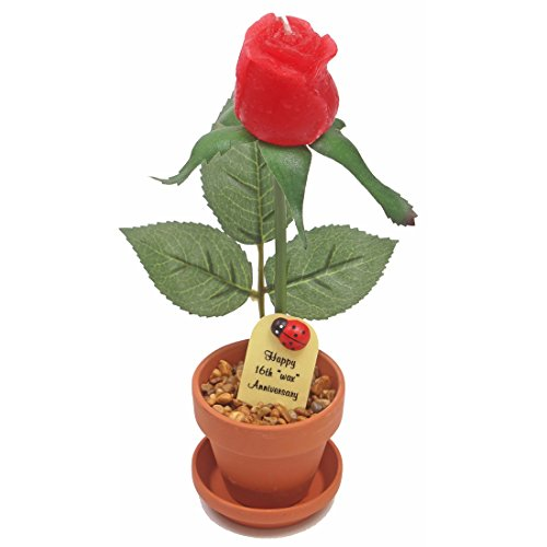 16th Wedding Anniversary Gift Potted Wax Rose