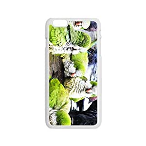 The Parrots Hight Quality Plastic Case for Iphone 6