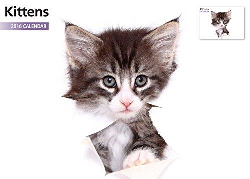 Calendario A4 de 12 meses 2016 con diseño de gatitos