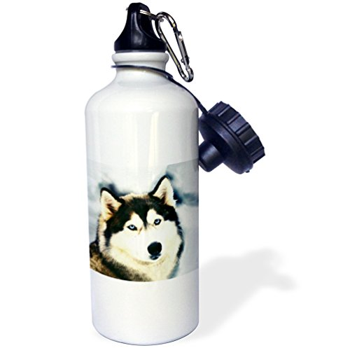 3dRose wb_517_1 Staring Siberian Husky Sports Water Bottle, 21 oz, White (Husky Siberian Water Bottle)