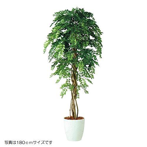 人工観葉植物 アカシアリアナ150 高さ150cm dt98985 (代引き不可) インテリアグリーン 造花 B07SSGTQYZ