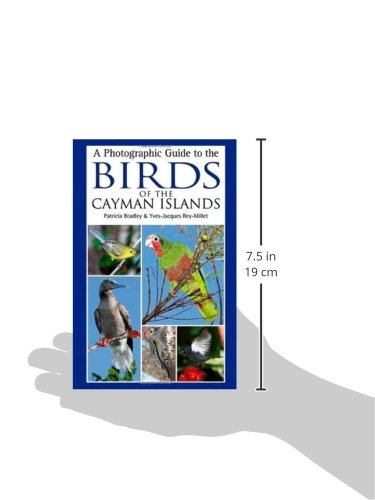 A Photographic Guide to the Birds of the Cayman Islands: Patricia E on grand caymanian resort, grand tortugas, grand incentives destinations, grand lido negril jamaica, grand caymon, grand opening flyer, grand caynan, grand costa maya bay, grand navigator vacations, grand panama, grand anse haiti, grand turk, grand ca, grand old house,