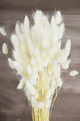 Italian Bleached Bunny Tails Ornamental Grass Bundle 2 Ounce - Excellent Home Decor - Outdoor Indoor