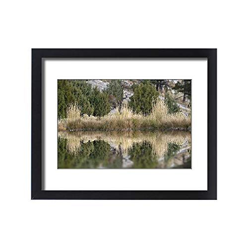 Media Storehouse Framed 20x16 Print of Grass Reflection, Canary Spring, Yellowstone National Park, Montana (18245731)