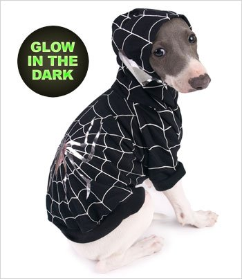 Spider-Dog (Black) Costume for Dogs – Size 3 (10.75″ x 14″ – 16″ g), My Pet Supplies
