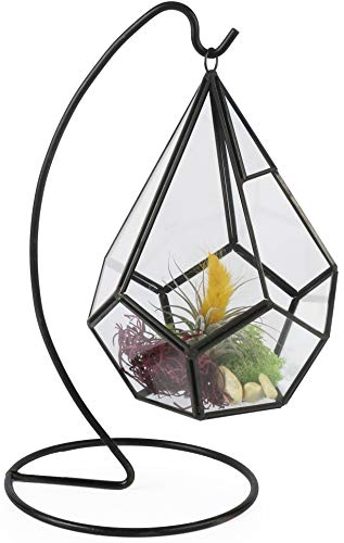 Circleware 32501 Terraria Glass Terrarium with Black Metal Frame-Stand Home Decor Flower Balcony Display Box and Garden Gifts, 5.91