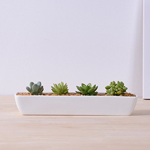 Succulent Pot, Herb Planter or Cactus Pot - White Minimalist Long Rectangular Pot - 11in x 2in x 2.3in - Indoor Outdoor Planter by Gander Lane (Windowsill Pots compare prices)