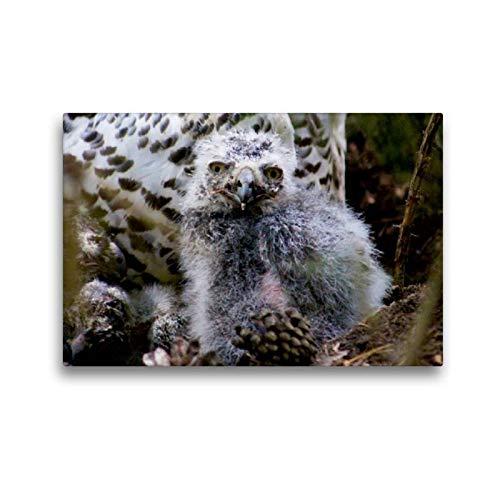 CALVENDO Toile de qualité supérieure 45 x 30 cm, Motif hiboux et Courses | Tableau Mural, Image sur Toile, Toile imprimée sur Toile, Impression sur Toile Natur Nature