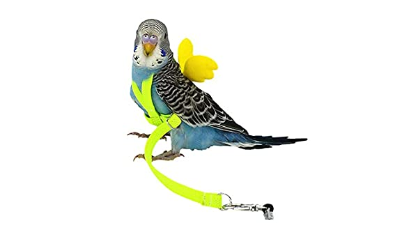 Hualieli Bird Leash, Pet Bird Harness and Leash, Flying Anti ...