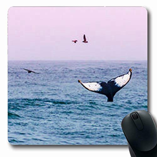 (Pandarllin Mousepads Grove Humpback Whale Waves Tail Coast Seagulls Fly Wildlife Monterey Nature Santa Oblong Shape 7.9 x 9.5 Inches Oblong Gaming Mouse Pad Non-Slip Rubber Mat)