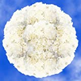 GlobalRose 400 Fresh Cut White Carnations - Fresh Flowers Wholesale Express Delivery