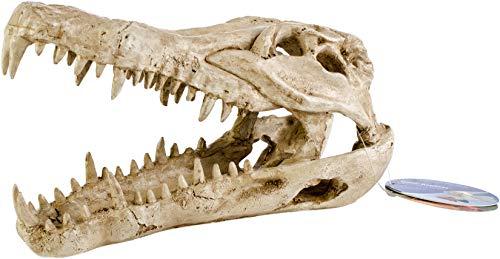 (Pen Plax RR1065 Crocodile Skull Animal Resin Ornament for Fish Tanks )
