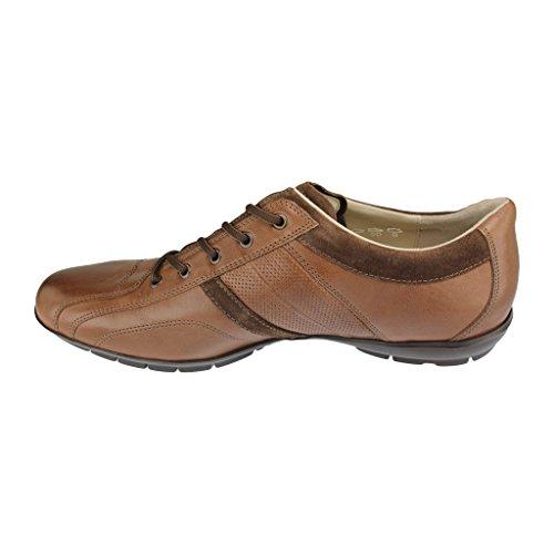 Lloyd Shoes GmbH, tabacco/sigaro (TOBACCO/CIGAR)