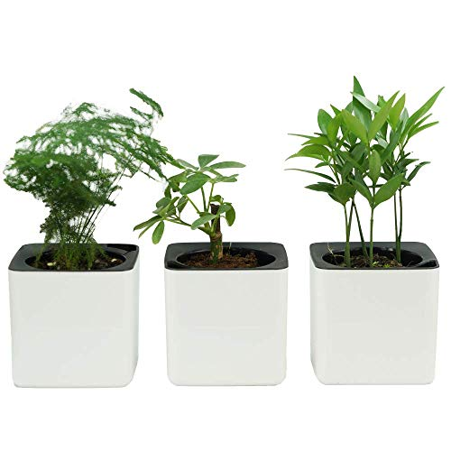4 inch Self Watering Planter Foolproof Indoor Home Garden Modern Decorative Pot for Potting Smaller House Plants Herbs Succulents or Start Seedlings Set of 3 (White)