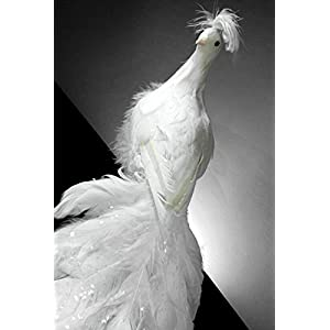White Peacock 27in Natural Feathers - Excellent Home Decor - Outdoor Indoor 16