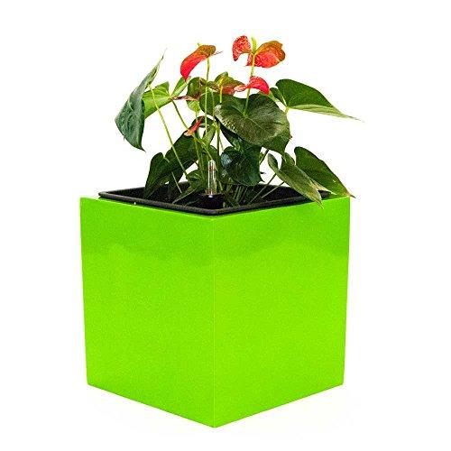 Blumenkübel Fiberglas quadratisch 48x48x48cm hochglanz avocado grün.