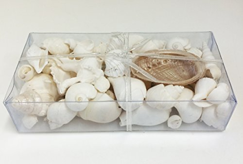 PEPPERLONELY White & Pearl Shells, Gift Box Sea Shells, 16 OZ Approx. 40+PC Shells, Box Size 8x4x1.5 Inch