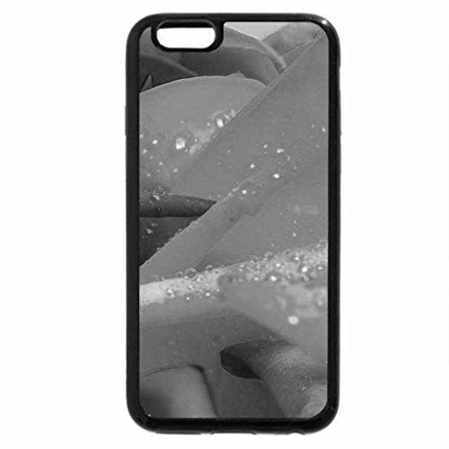 iPhone 6S Plus Case, iPhone 6 Plus Case (Black & White) - real rainbow rose