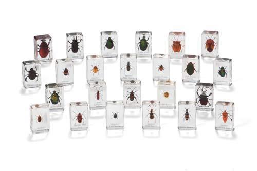 Cicada Education KB2216 Knowledge Builder Beetles, Bugs, Clear