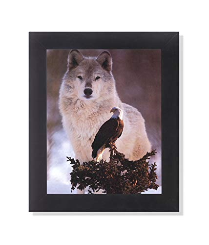 American Bald Eagle Bird with Gray Wolf Photo Wall Picture Framed Art Print ()