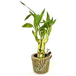 9GreenBox - Lucky Bamboo - Ceramic Panda Vase