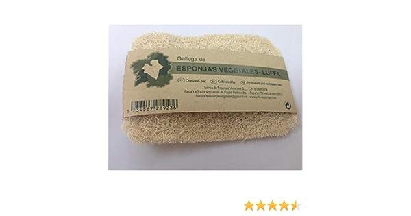 Estropajo natural de luffa, Vitroesponja vegetal.: Amazon.es: Hogar