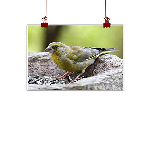 duommhome Abstract Painting Bird Feeding Sunflower Seeds from The Feeder Greenfinch Cardue Decorative Painted Sofa Background Wall 20