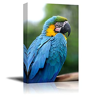 Lovely Work of Art, Made With Top Quality, Blue and Gold Macaw Perched Wall Decor