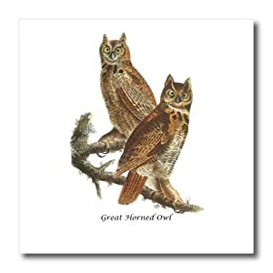 3dRose Great Horned Owl by John James Audubon - Iron On Heat Transfer, 6 by 6-inch, For White Material (ht_114065_2)