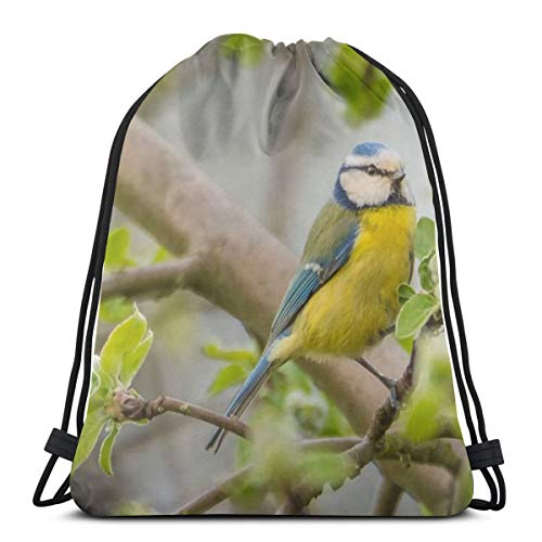 Blue Tit Blue Bird Bath Custom Drawstring Shoulder Bags Gym Bag Travel Backpack Lightweight Gym for Man Women 16.9