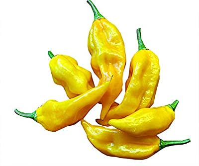 30+ ORGANICALLY Grown Habanero Lemon Hot Pepper Seeds Heirloom Non-GMO, Productive, Spicy, Delicious! from USA