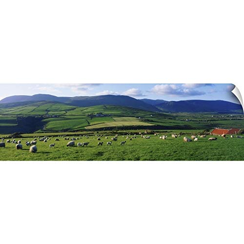 "CANVAS ON DEMAND Pastoral Scene Near Anascual, Dingle Peninsula, County Kerry, Ireland Wall Peel Art Print, 36""x11"""