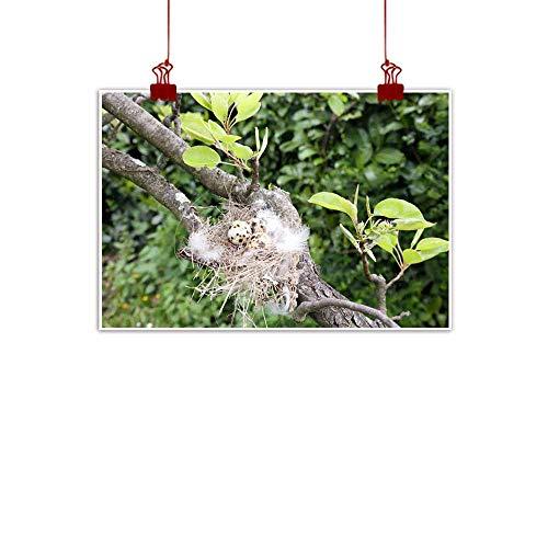 (duommhome Modern Frameless Painting Bird Eggs in The nest Natural Art 20
