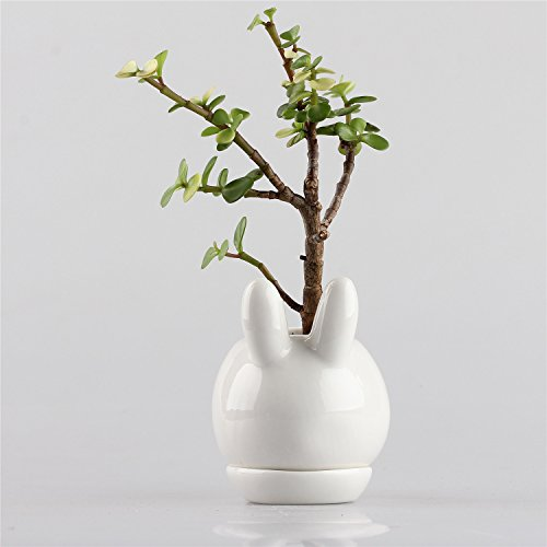 Kawaii Small Simple Rabbit Ivory White Ceramic Flower Pot Bunny Miniature Planter for Succulent Cactis with Tray 3.93x2.95x4.33inches Sculpture Plants not included