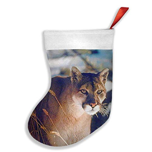 (Wild Cougar in Snow Wildlife Mountain Lion Christmas Stockings Xmas Party Mantel Decorations)